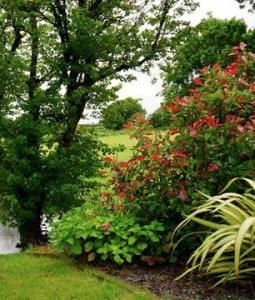 Photo of garden, lake, and hillside