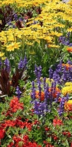 Photo of red, purple, and yellow flowers